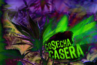 Cosecha Casera,Home Grown News Story